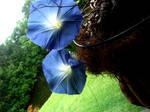 Blue Morning Glory Vibrant
