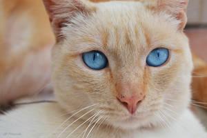 Flukus Eyes by Gbbogner
