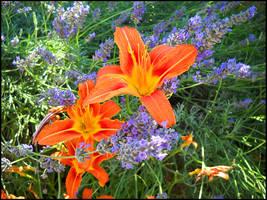 Purple and Orange by Ottachan