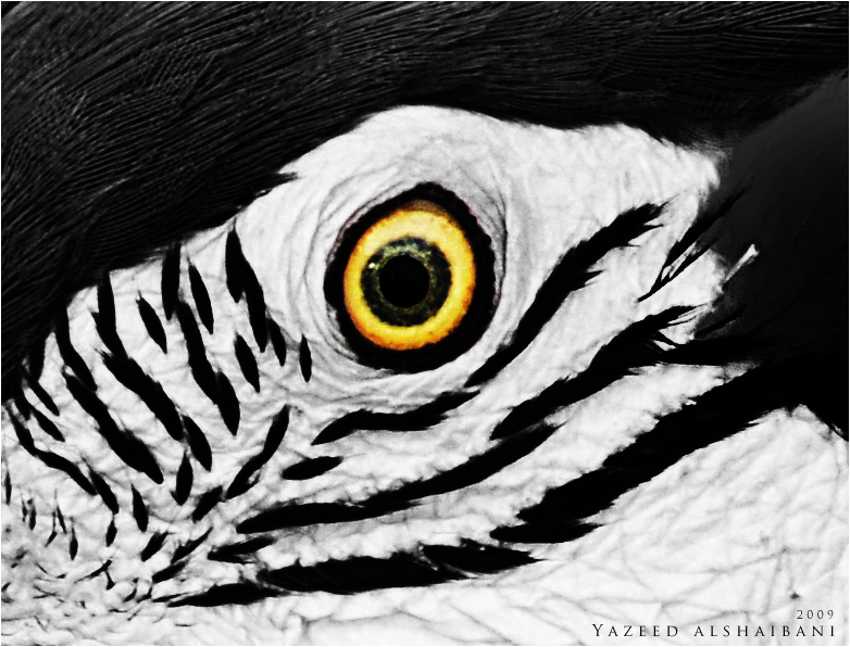 Eye abstract by YazeedART