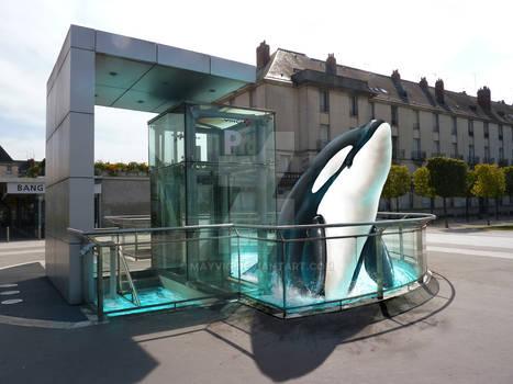 School ArtWork -Killer Whale