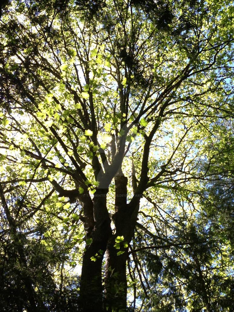 Tree in Trumpeter Creek