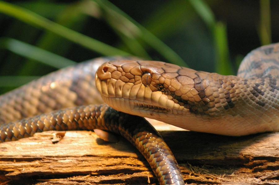 Ssssssss Snake by Whovian2 on DeviantArt