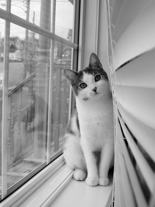 Window Kitteh by Girlfromcloud9
