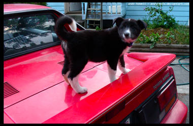 puppy i r drivez by andyrewfx