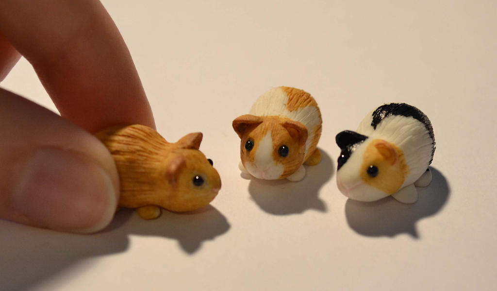 Guinea Pig set 3 by insanable