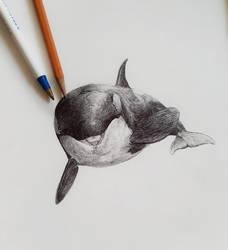 Happy Whale :)