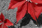 Red (Color Splashed)