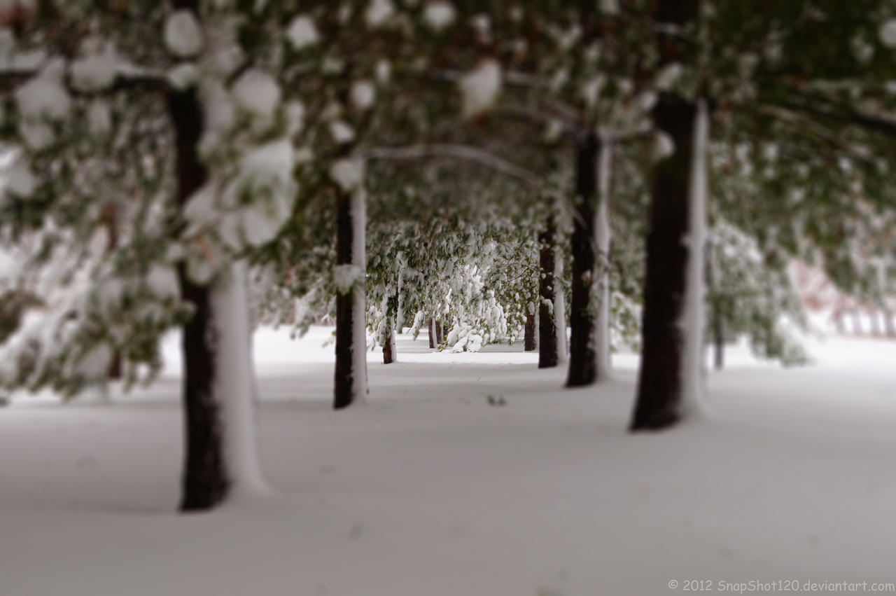 Snowy Pine Path by SnapShot120