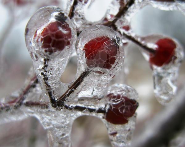 Frozen Delicacy by forestchild666