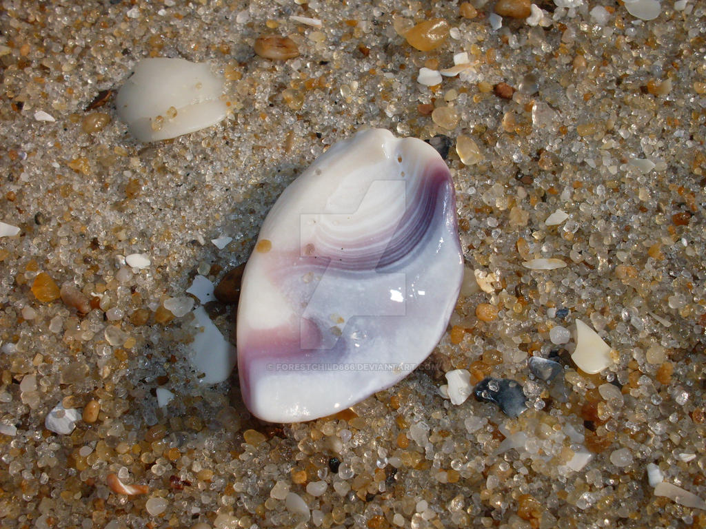 Shell by forestchild666