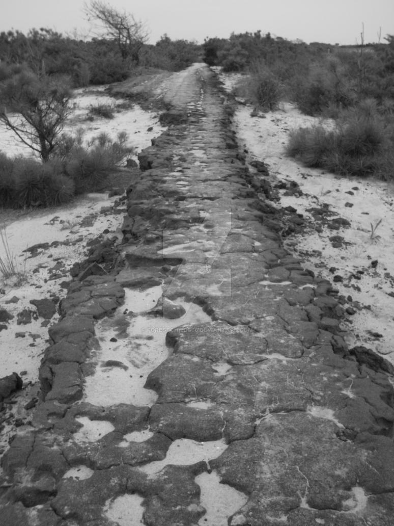 take the old road by forestchild666