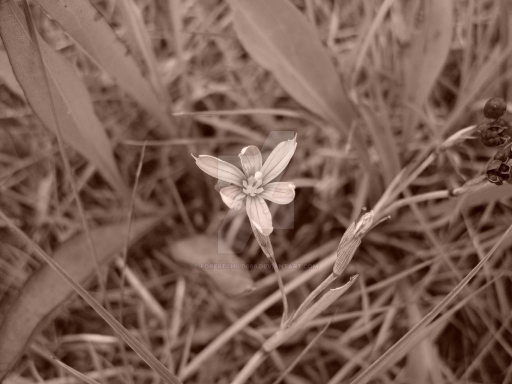 flower by forestchild666