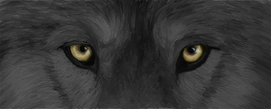 Wolf eyes in dark - photo#2