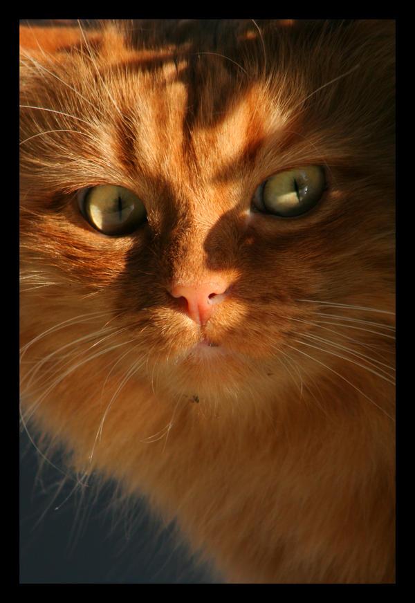 Fire Cat. by sekhmet-neseret