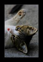 Kitty... by sekhmet-neseret