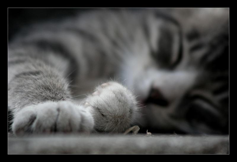 Little Paws. by sekhmet-neseret