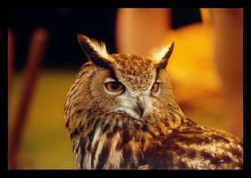 Owl by sekhmet-neseret