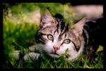 Le Chat aux Yeux Verts.