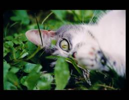 Miss Kitty. by sekhmet-neseret