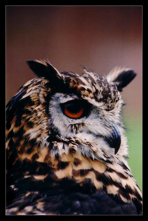 Hypnotzing Owl II by sekhmet-neseret