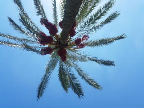 Photo 2: Lying Under Palm