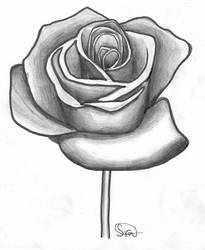 Graphite 14: Accentuated Rose