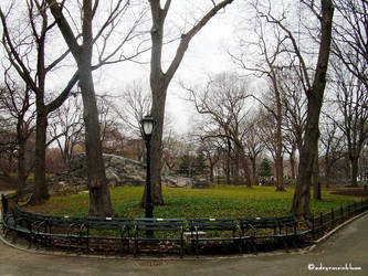 Central Park by adryroseinbloom