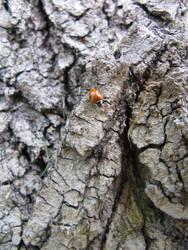 bark with a ladybug 2 by synesthesea