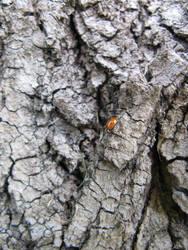 bark with a ladybug 3 by synesthesea