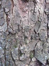 bark texture 01 by synesthesea