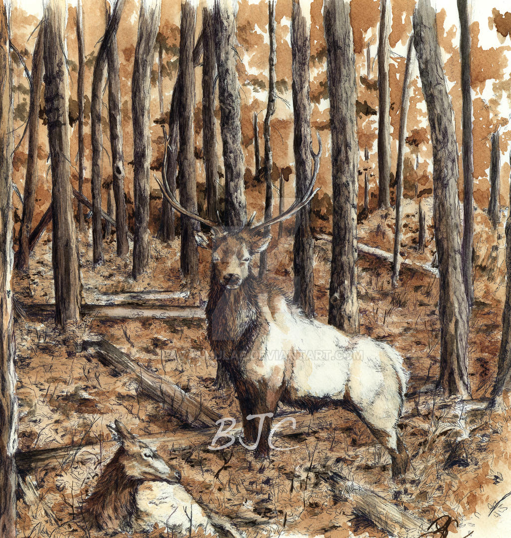 Elk by lavandulae