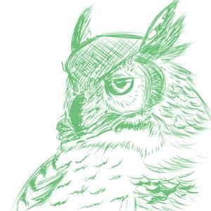 Owl is not impressed