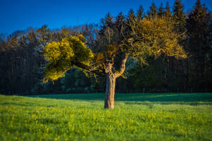 Colorful tree by kubinski078