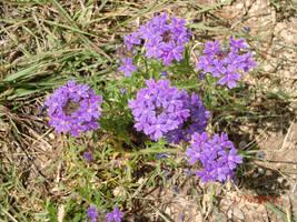 Flower 015 by Dark-Crescent-Stock
