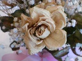 Dried Rose 001 by Dark-Crescent-Stock