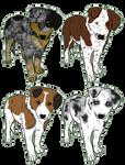 Herding breed pups - 1 LEFT