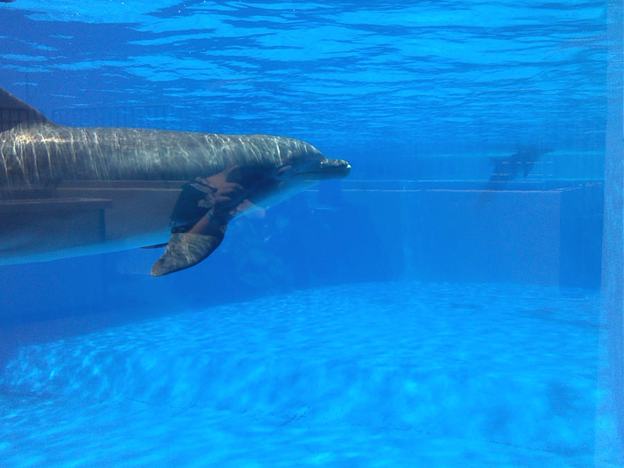 Dolphin is not a fish tis a mammal by witherzane on for Is a dolphin a fish