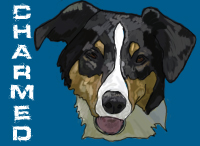 Boarder Collie-Charmed by Artistico-Sonar