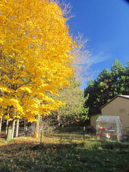 A Bright Fall Day at Home