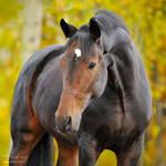 bay horse, autumn 2009