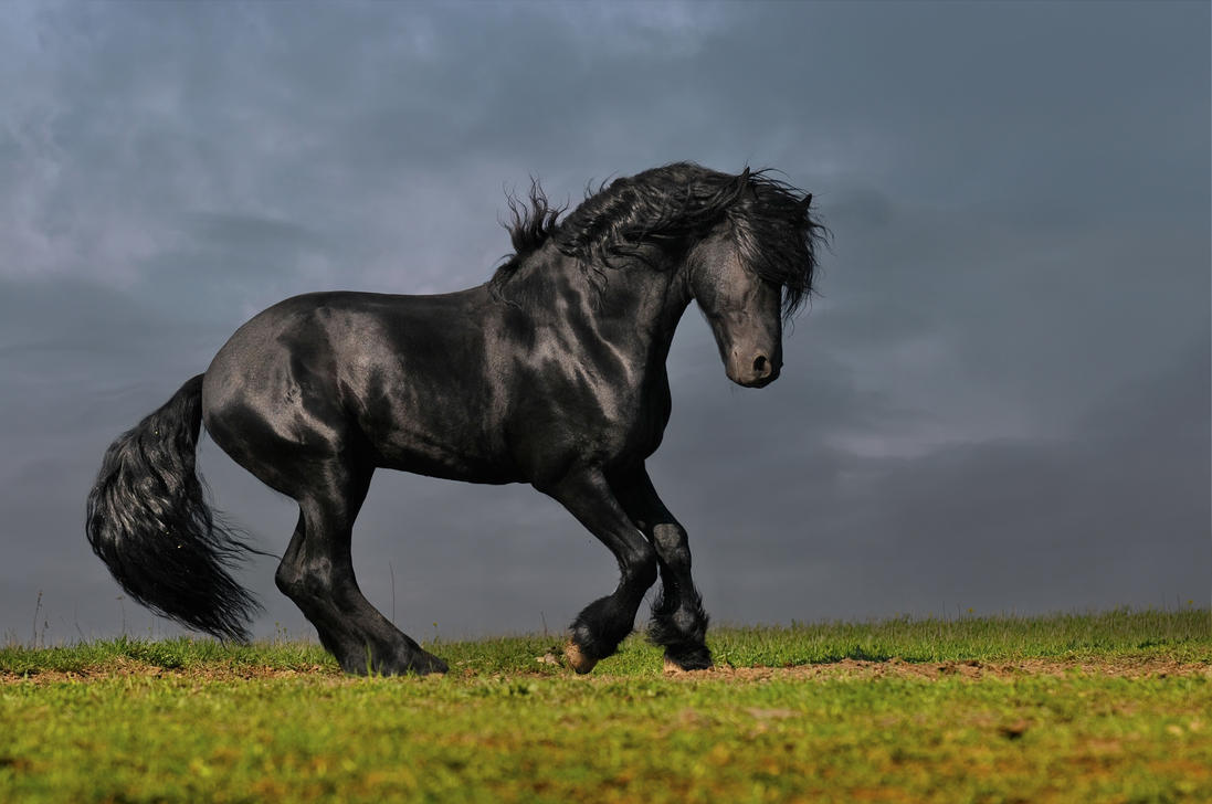 black friesian Fel-Non by Vikarus