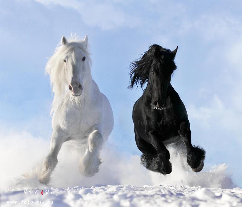 Скачать Обои На Рабочий Стол Лошади