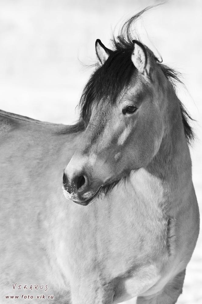 Vyatka horse by Vikarus