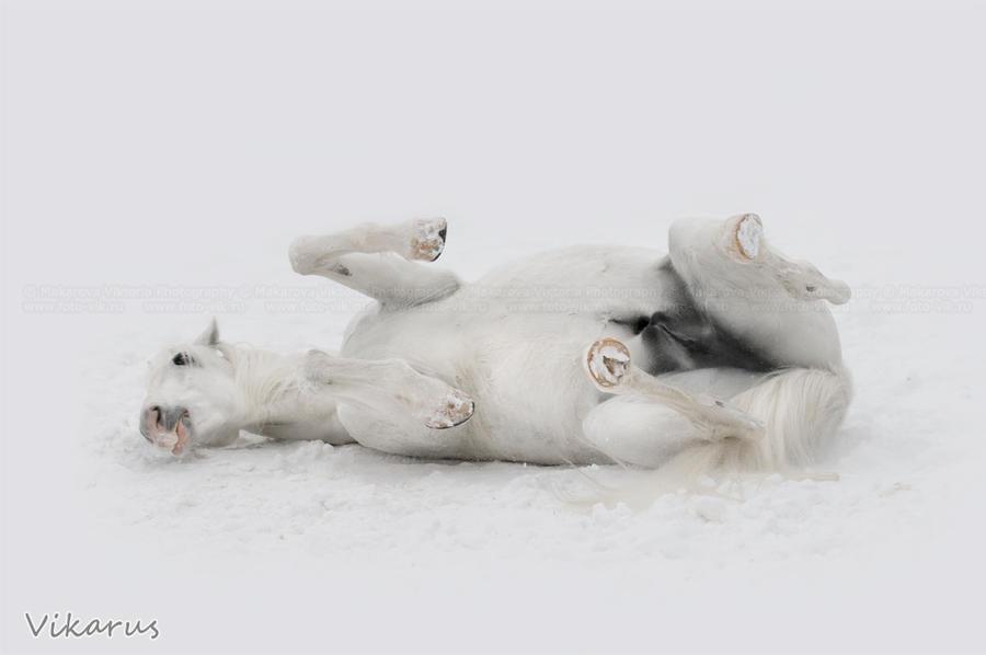 SnowBath by Vikarus