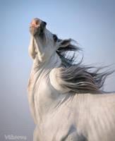 hmmm.... twister-horse