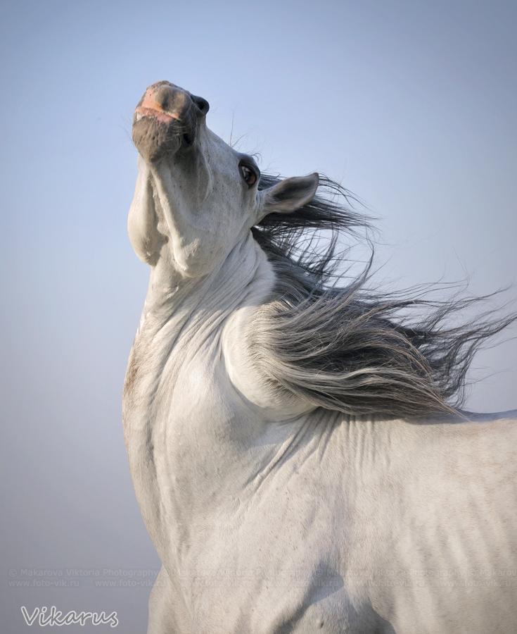 hmmm.... twister-horse by Vikarus
