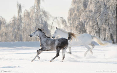 Russian winter 2011
