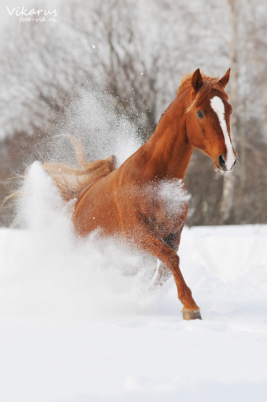 Exel in the snow by Vikarus
