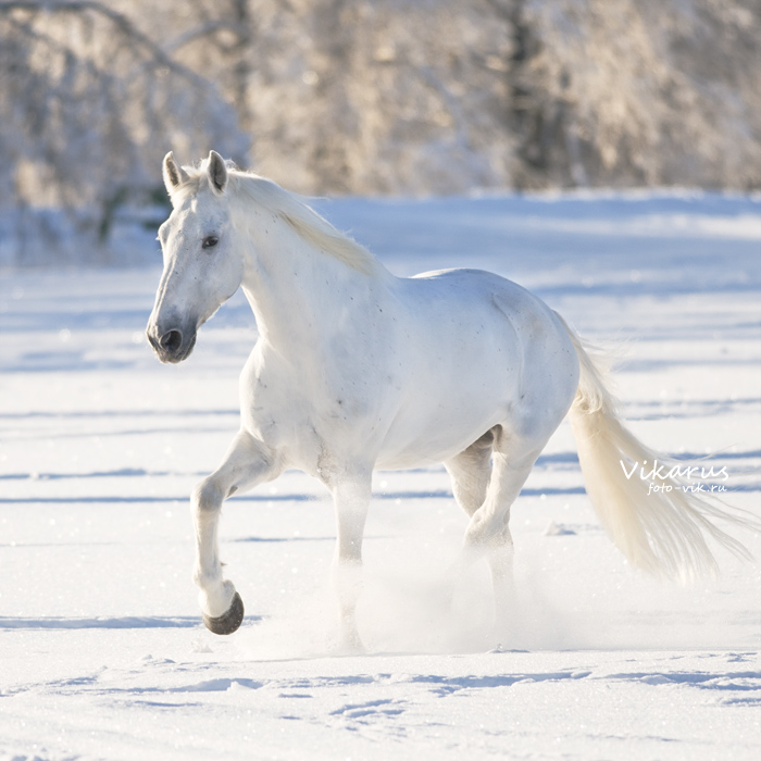 winter magic by Vikarus